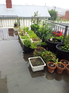 The Balcony Garden