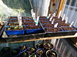 Seeds and Basil Seedlings Oct 2015