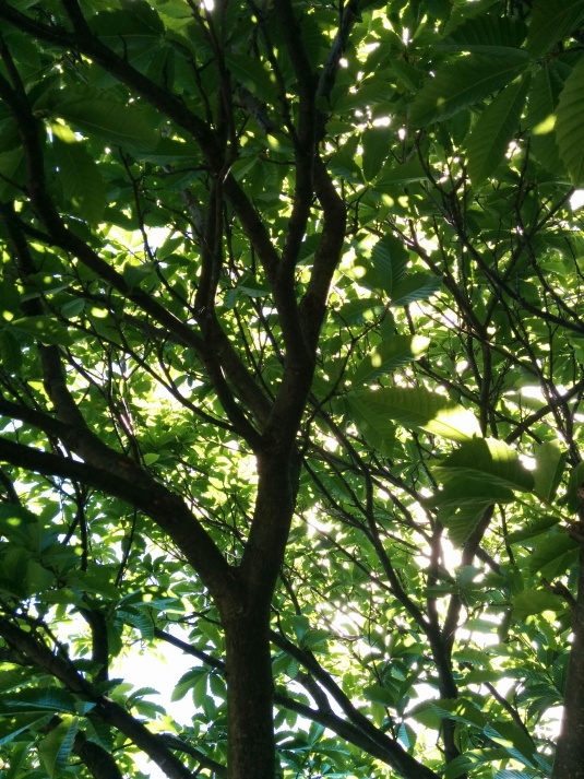 My favourite spot under the Chestnut tree